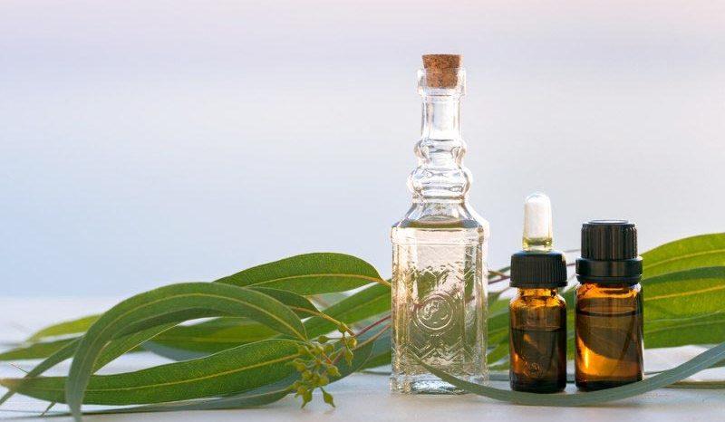 Top 10 bienfaits de l'huile d'Eucalyptus