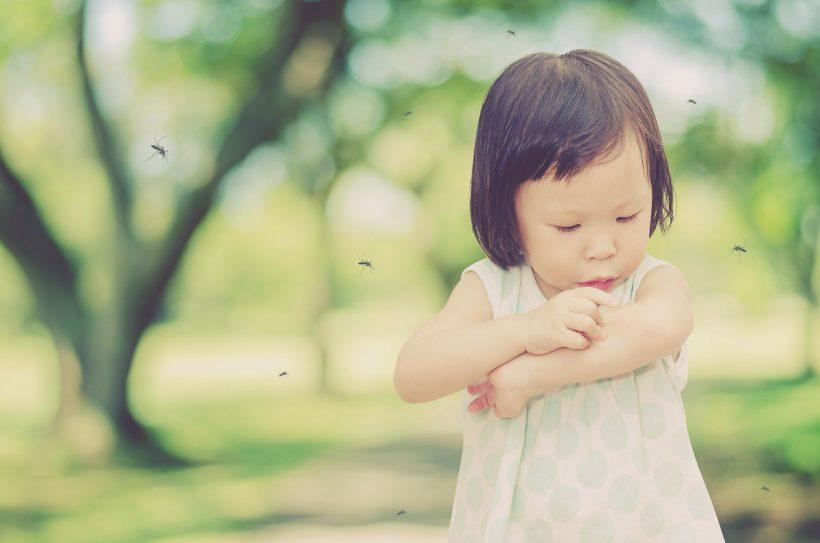Huile essentielle anti moustique, diablement efficace contre les nuisibles !