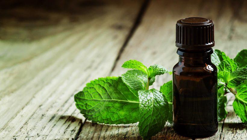 Huile essentielle de menthe poivrée : contre les migraines et les troubles digestifs