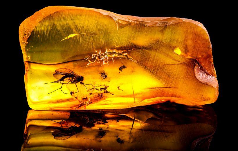 L'ambre : histoire, propriétés et utilisation en lithothérapie