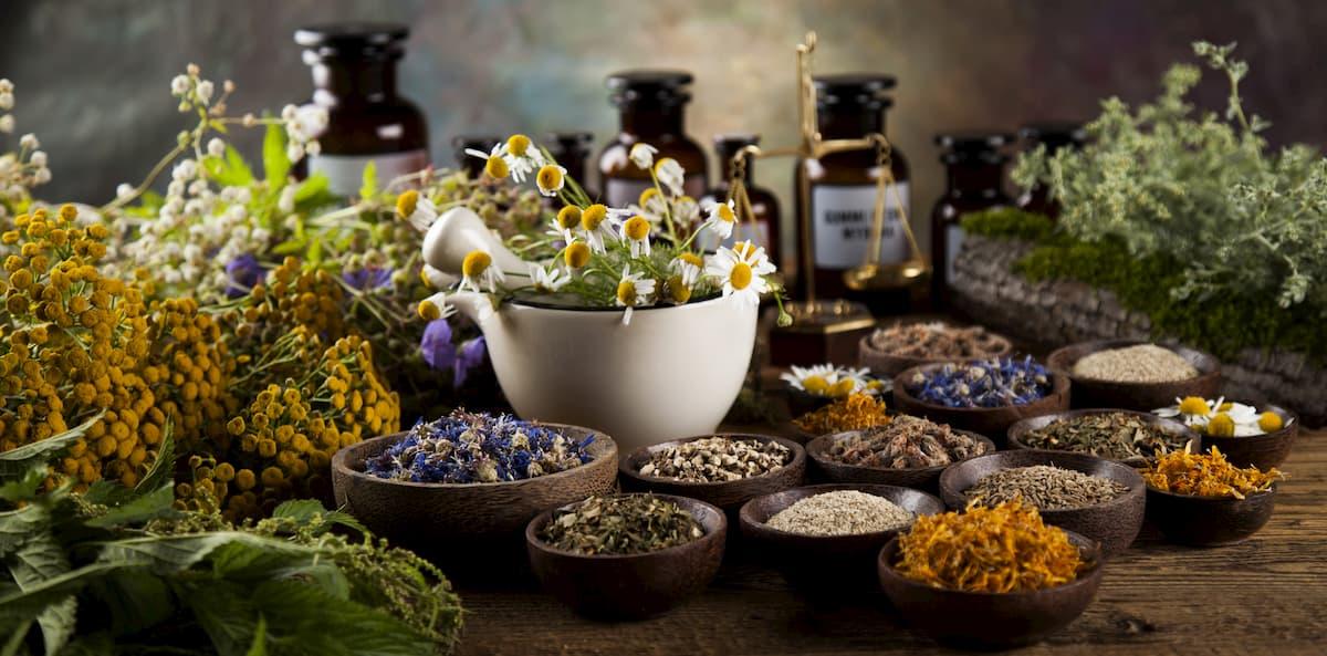 meilleures plantes phytothérapie