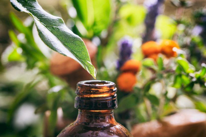 [Guide du débutant] : tous les bienfaits de la phytothérapie