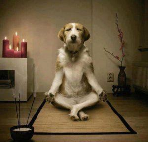 yoga chien doga