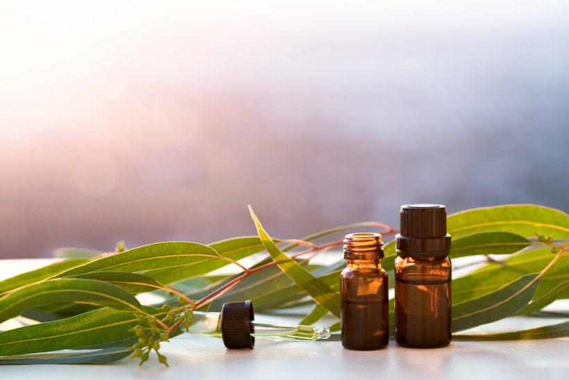 Top 10 bienfaits de l'huile essentielle d'Eucalyptus