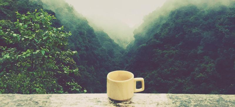 bienfaits du thé oolong