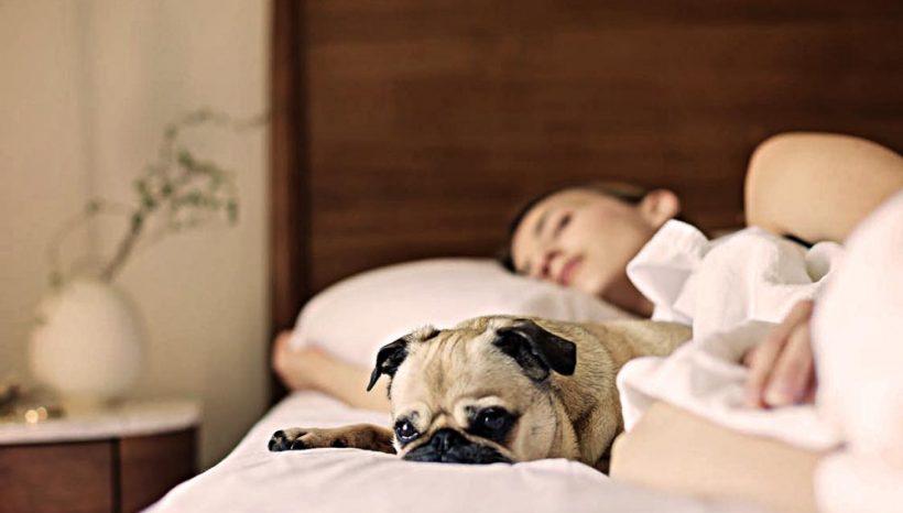 8 remèdes naturels pour retrouver le sommeil (et qui fonctionnent)