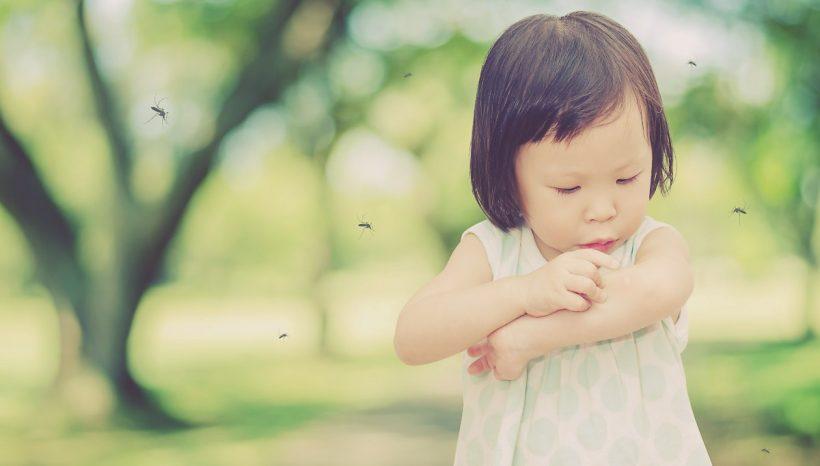 Huile essentielle anti moustique, laquelle ? En voici 8 diablement efficace contre les nuisibles !