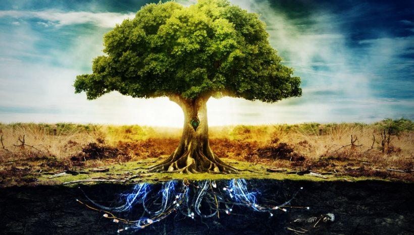 Arbre de vie, significations à travers les âges et les religions