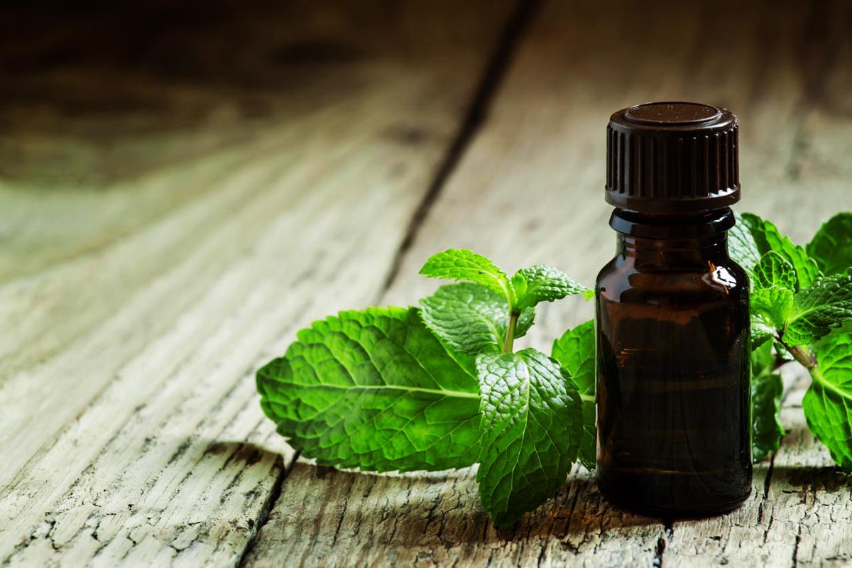 Huiles Essentielles Contre Les Souris huile essentielle de menthe poivrée : contre les migraines
