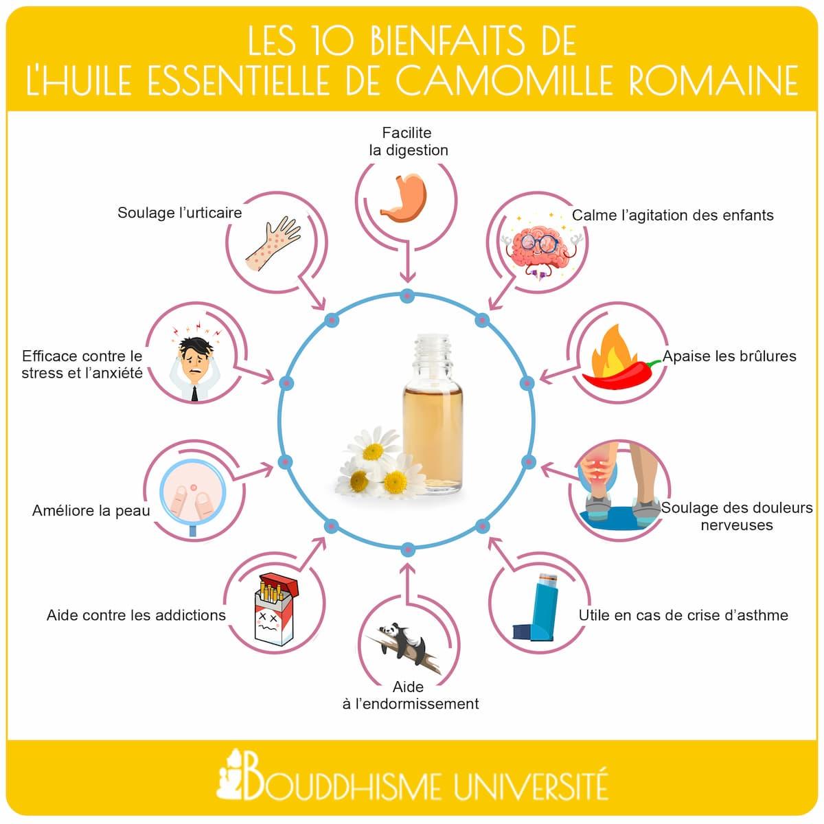 bienfaits huile essentielle de caomille romaine