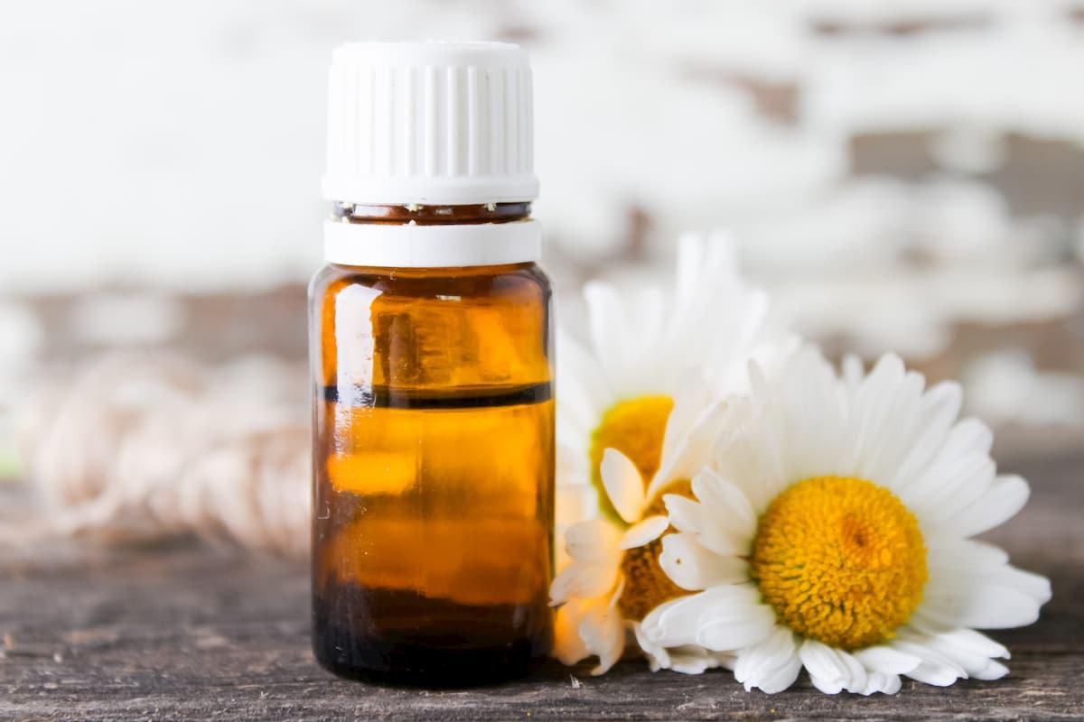 Aceite esencial de manzanilla romana: beneficios y usos de este aceite calmante • Budismo universitario