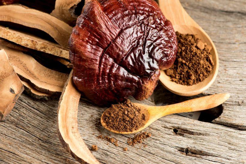 Reishi : bienfaits du champignon de la longévité